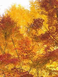 稲城の紅葉