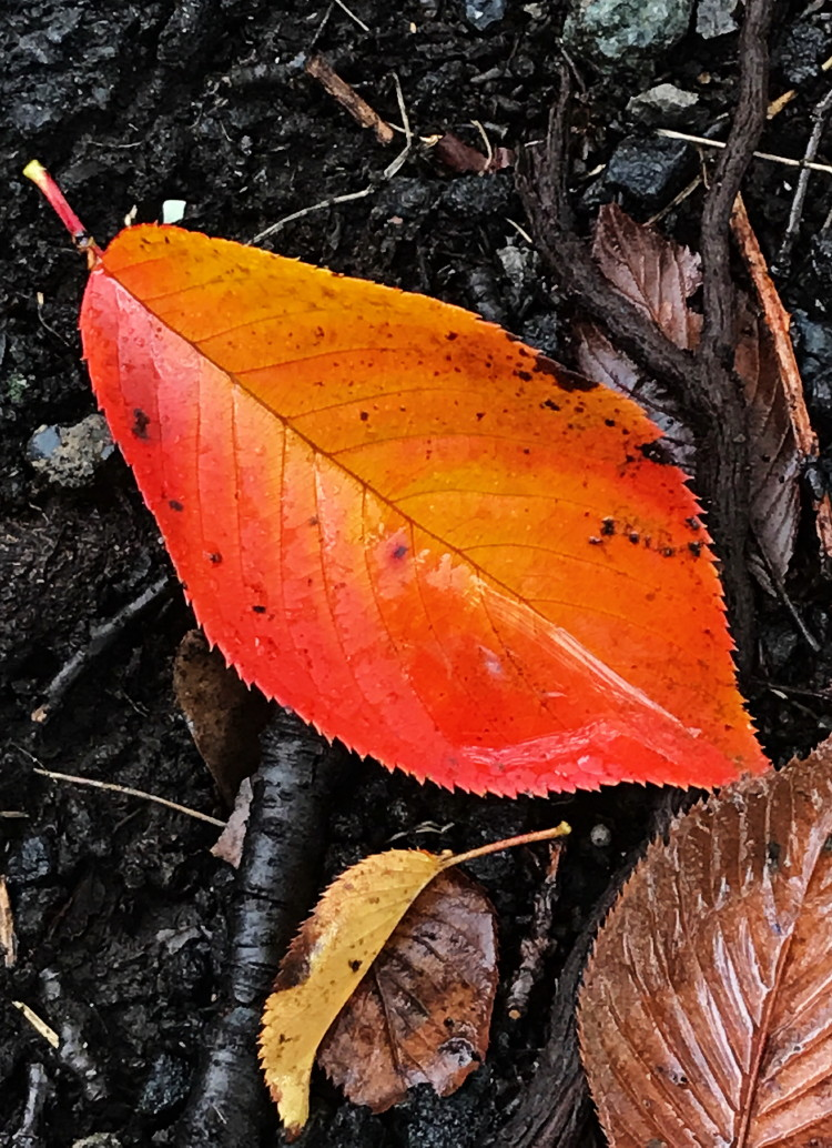 雨の日の落ち葉